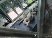 Casts of bodies found in Pompeii
