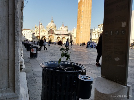 An abandoned rose on St. Mark's Square (Piazza San Marco)
