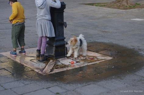 Doggy in the Jewish ghetto in Venice