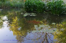 France Giverny 2011 (1)