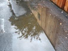 Random puddle (1)