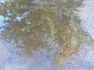 Random puddle (4)