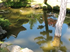 SF Japanese Garden 2007 (3)_1